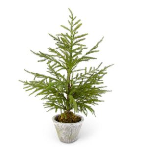 Great-Finds-Parker-Products-K&K Interiors-28-inch-norfolk-pine-tree-in-gray-pot