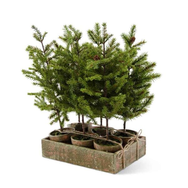 Great-Finds-Parker-Products-K&K Interiors-6-assorted-potted-extra-tall-pine-w-wood-tray