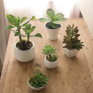 Great-Finds-Parker-Products-Kalalou-set-of-5-artificial-succulents-with-white-ceramic-pots