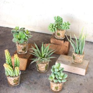 Great-Finds-Parker-Products-Kalalou-set-of-6-artificial-succulents-in-glass-containers